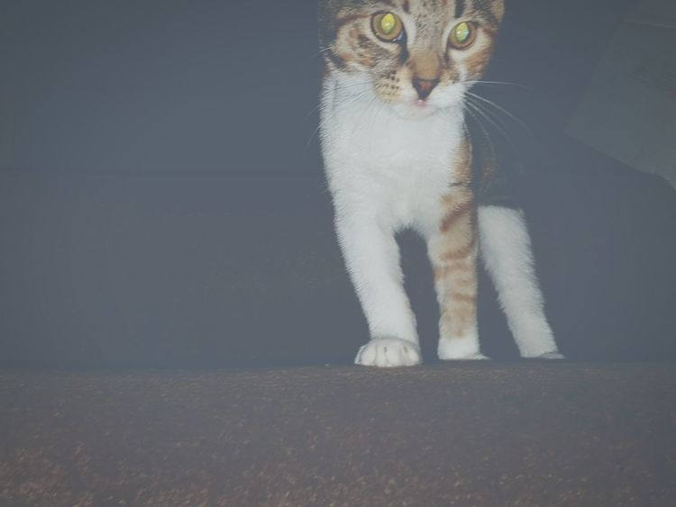 Falisha New Edition Kitten My Cat Cats Eyes Two Is Better Than One
