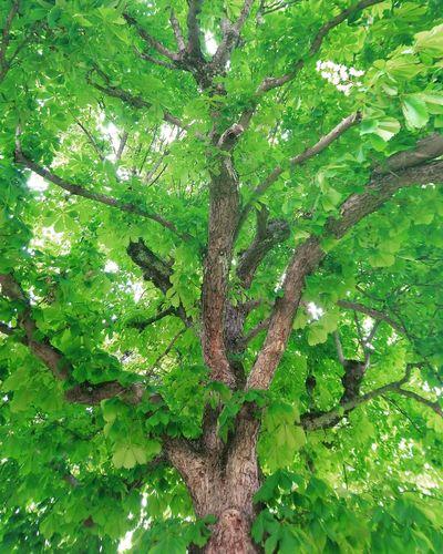 Green tree Tree