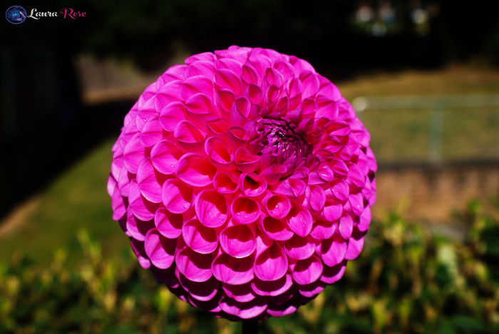 Beauty In Nature Blossom Botany Close-up Delias  Flower Flower Head Focus On Foreground Fragility Freshness In Bloom Nature Pattern Petal Pink Color Single Flower Soft Focus Vibrant Color