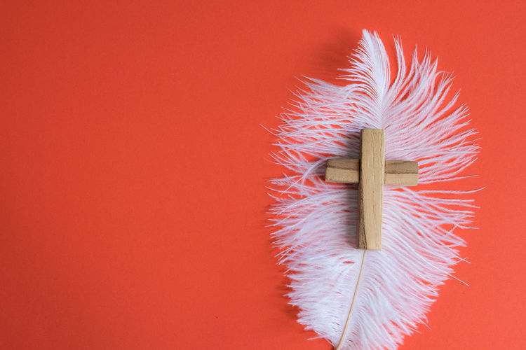 Close-up of feather against red background