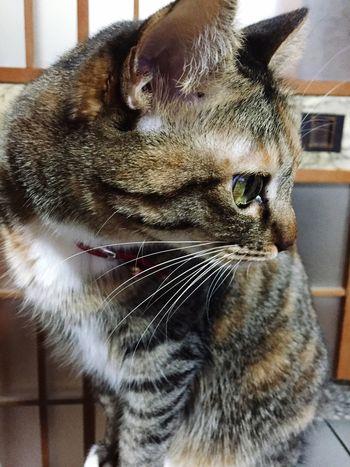 Cat Love Mypet ?