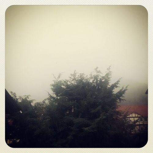 Ich gehe wieder ins Bett. Nebel Kalt Doof ScheissTag
