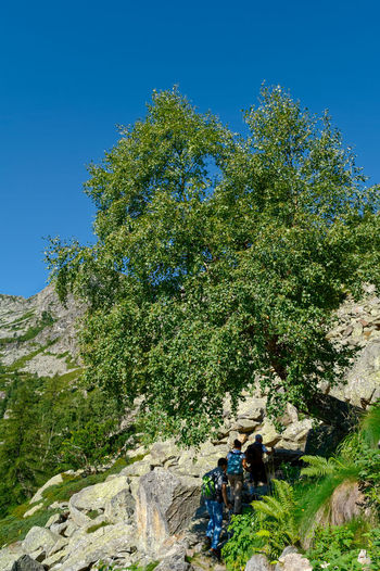 People by tree against blue sky