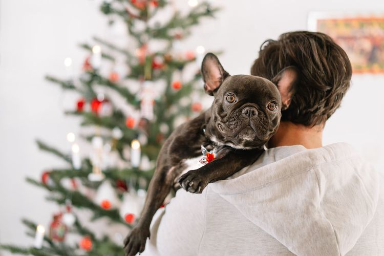Portrait of young dog owner man with french bulldog on christmas tree