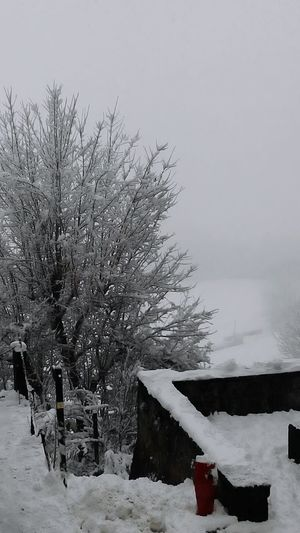 Landscape Hugging A Tree Snow ❄