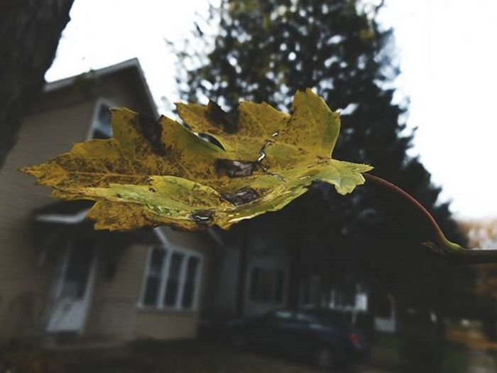 Createsomething Urbanlifestyle Dark Texture HighDefinition  Fall Leaves Beautiful Autumn Fall Natural Nature Brown Green Greenleaves Yellow Death Photographic Memory Art Is Everywhere