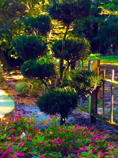 Botanical Gardens Nature Eye Em Nature Lover Beautiful LPhoneography Photography