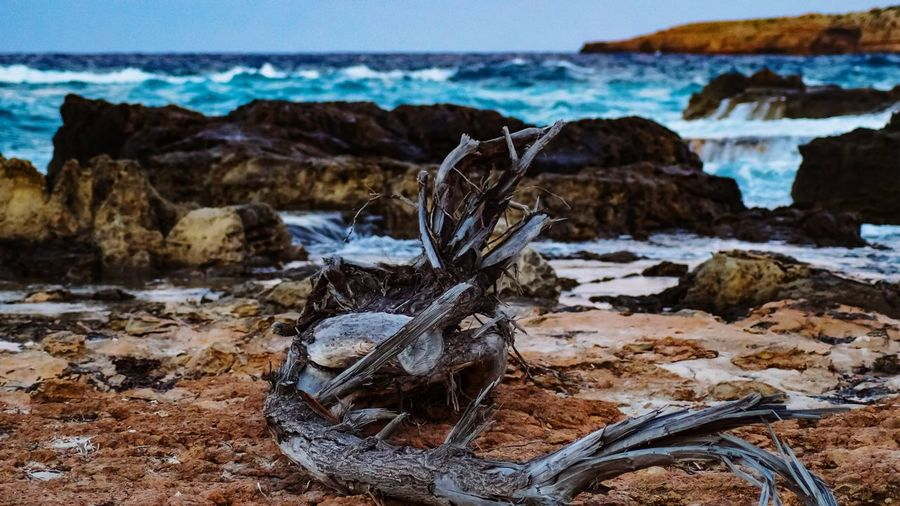 Driftwood on rocks by sea against sky