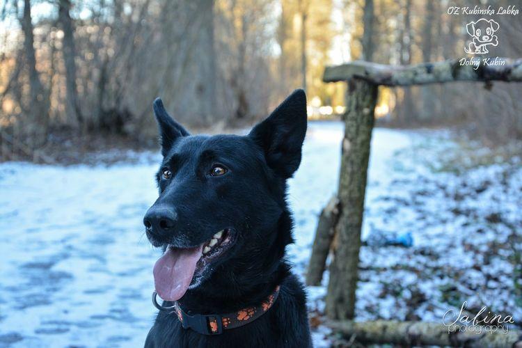 Gina :) Black Dog Shelter Photography German Shepherd Photo Winter Dog Walking Animal Beautiful