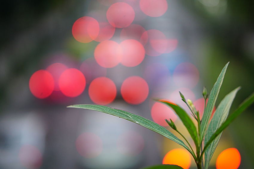 Defocused No People Outdoors Backgrounds Nature Flower Close-up Illuminated Beauty In Nature Tree City Freshness