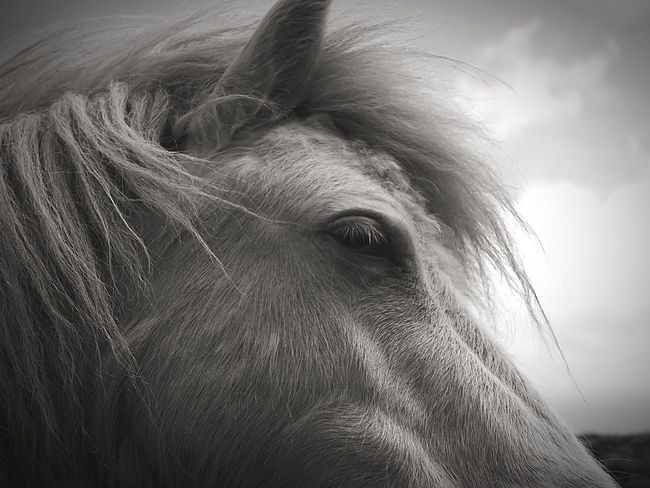 Pony Horse Animal Portrait Animal Photography Godsgarden Black & White Rx100m3 SONYrx100m3 White Horse