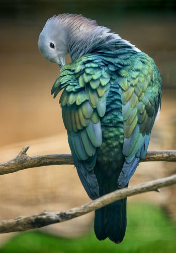 Animal Animal Themes Animal Wildlife Animals In The Wild Beauty In Nature Bird Branch Close-up Day Feather  Focus On Foreground Macaw Nature No People One Animal Outdoors Parrot Perching Tree Vertebrate