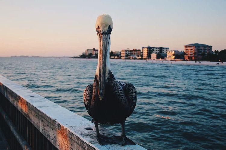 Bird by sea against sky