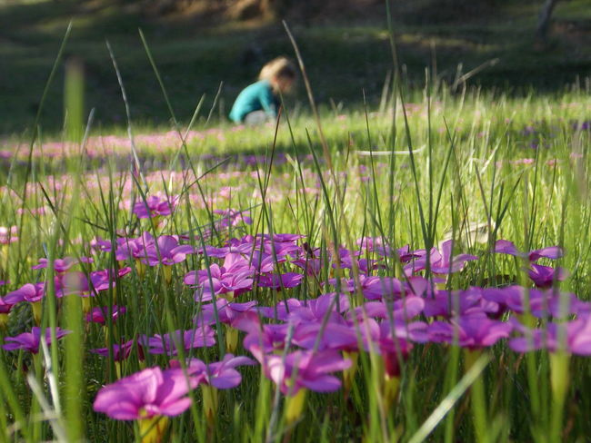 Blooming Flower Collection Flowers,Plants & Garden Flowers_collection Girl Girl In Flowers Girl In Nature Pink Flowers