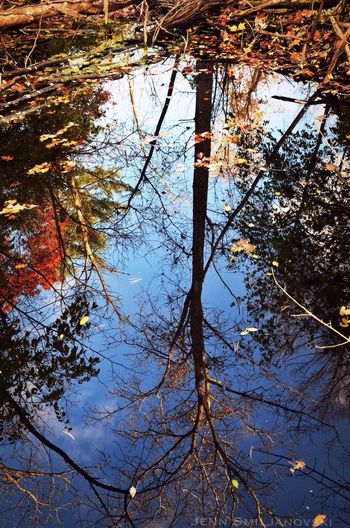 Time To Reflect Tadaa Community Trees Pond