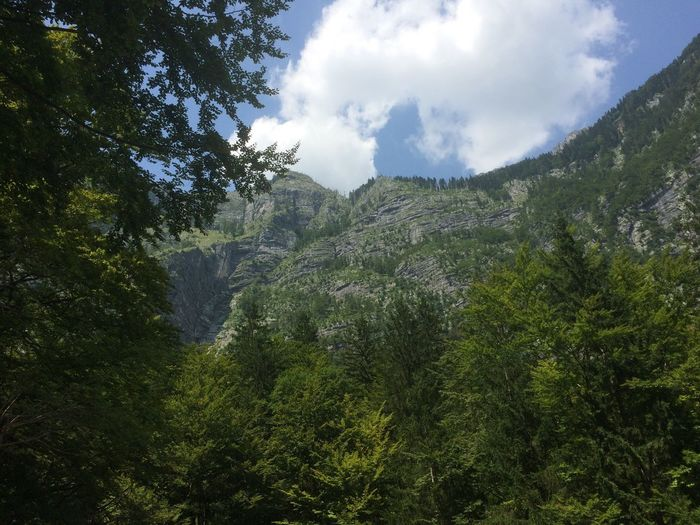 Part of the Julian Alps surrounding Savica Waterfall, Slovenia Slovenia Julian Alps Savicia Slap ( Savica Waterfall) Tourism Holiday Summer Walk Trees Mountains Mountain Range Tranquil Scene Tranquility Sky Nature Green Forest Landscape