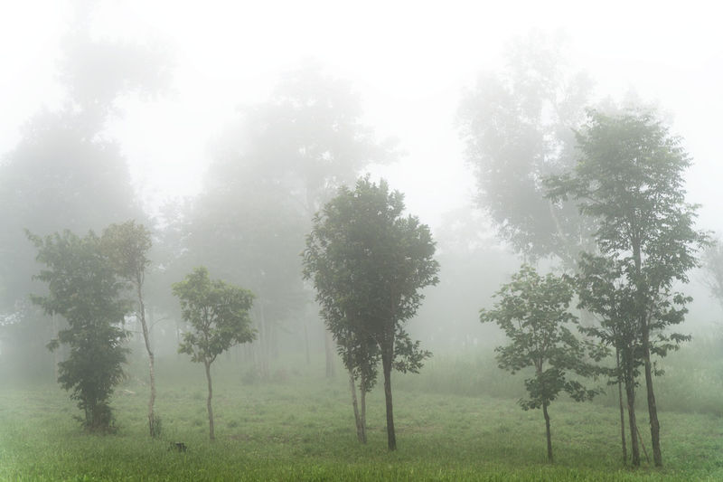 Fog Cover Trees Beauty In Nature Cover Covering Day Fog Forest Grass Landscape Morning Nature Nature No People Outdoors Sky Tree