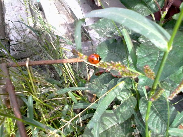 Ladybeetle Ladybug Green Plants Grass Eyeem Market Wolfzuachis