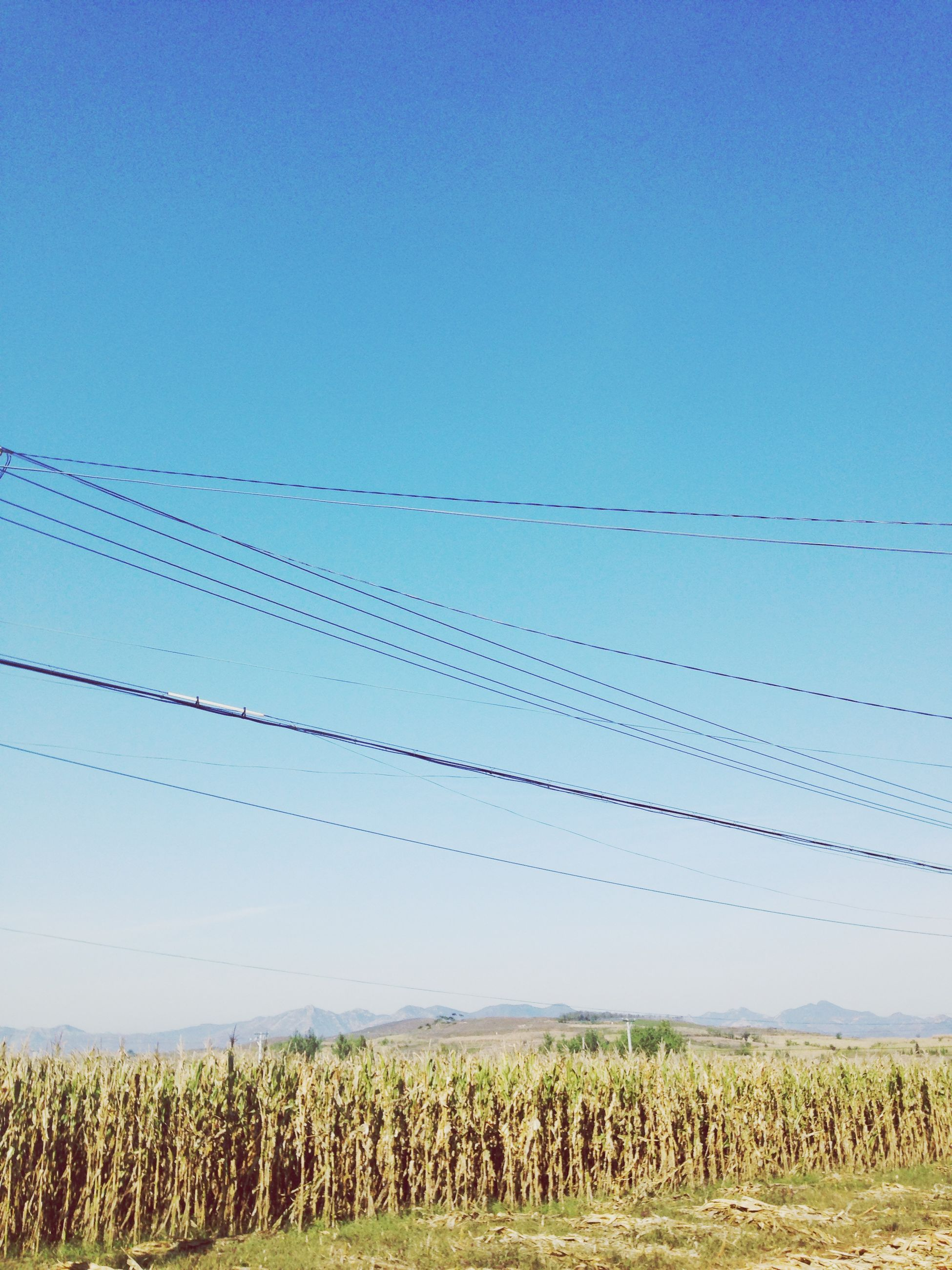 bird, animal themes, animals in the wild, wildlife, clear sky, flying, field, copy space, blue, nature, perching, flock of birds, tranquility, grass, low angle view, tranquil scene, landscape, beauty in nature, sky
