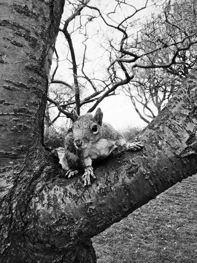 Squirrel on bare tree against sky
