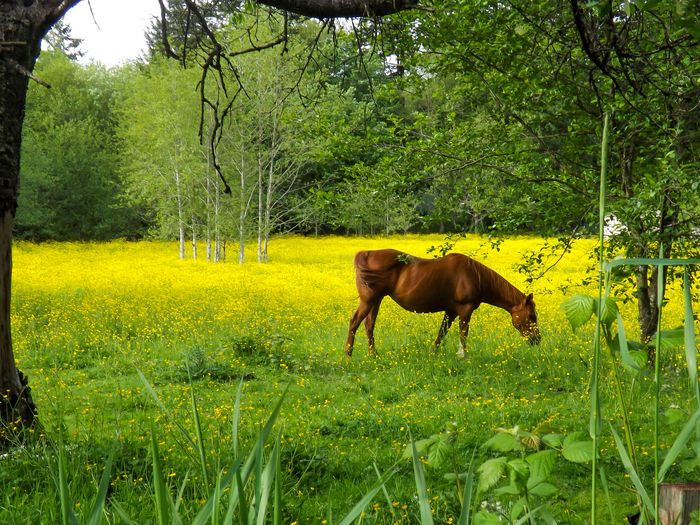 Animal Themes Beauty In Nature Day Domestic Animals Field Full Length Grass Grazing Green Color Growth Landscape Livestock Mammal Nature No People One Animal Outdoors Standing Tree