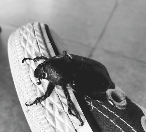 friend. Bugs Insect One Animal Close-up EyeEm Nature Lover EyeEm Gallery EyeEm Best Shots Eyeem Philippines Bicol Phone Photography Huaweigr52017 Blackandwhite B&W Collection B&w Photography Chucks Shoes