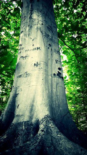 Graffiti tree.