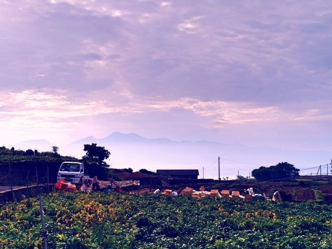 Harvest Time poteto( May Queen ) Fieldworker Agriculture Scenery with Mt.Unzen. Isahaya City Nagasaki Prefecture Clouds And Sky How's The Weather Today? / GX1 G lens 50mm & Pop filter use Vintage4 plus