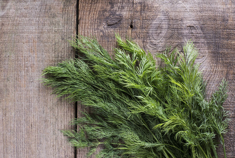 dill on old weathering wooden table Botany Close-up Day Dill Fence Focus On Foreground Fragility Freshness Green Green Color Growing Growth Nature No People Outdoors Plank Plant Weathered Wood - Material Wooden