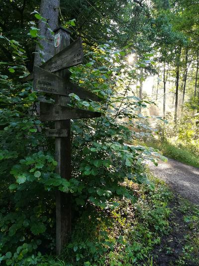 E1 R1 Sandebeck Teutoburg Forest Teutoburger Wald Wanderweg