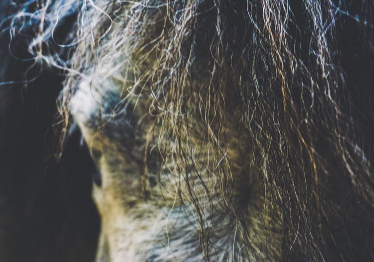EyeEm Best Shots Animal Animals In The Wild Horse One Person Nature Close-up Motion Outdoors Day Lifestyles Sunlight Hair Long Hair Hairstyle