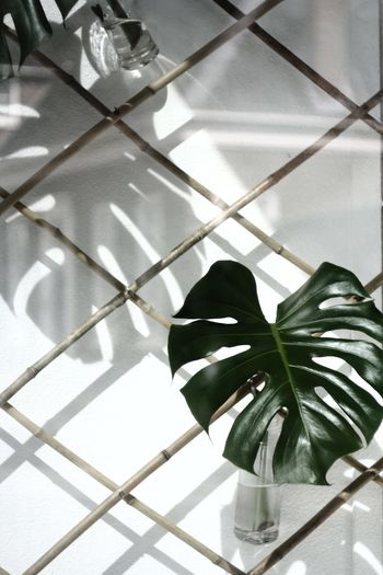 🐒. EyeEm Selects Nature Simplicity Minimalism Minimalobsession Minimal_perfection Minimallove Plants Indoors  No People Close-up Light And Shadow Reflection Taking Photos Shootermag The Week On EyeEm EyeEm Best Shots