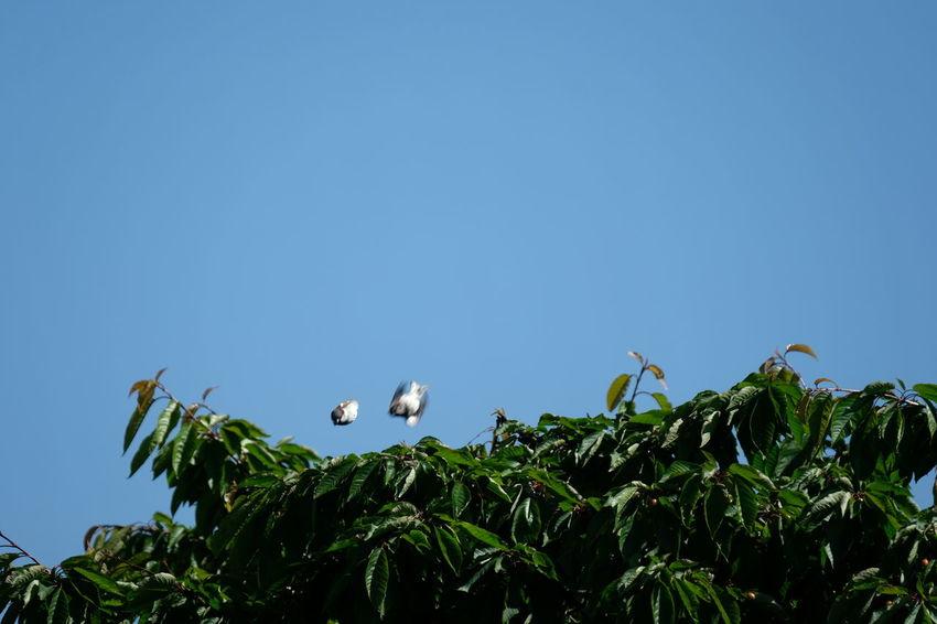 Vulture Plant
