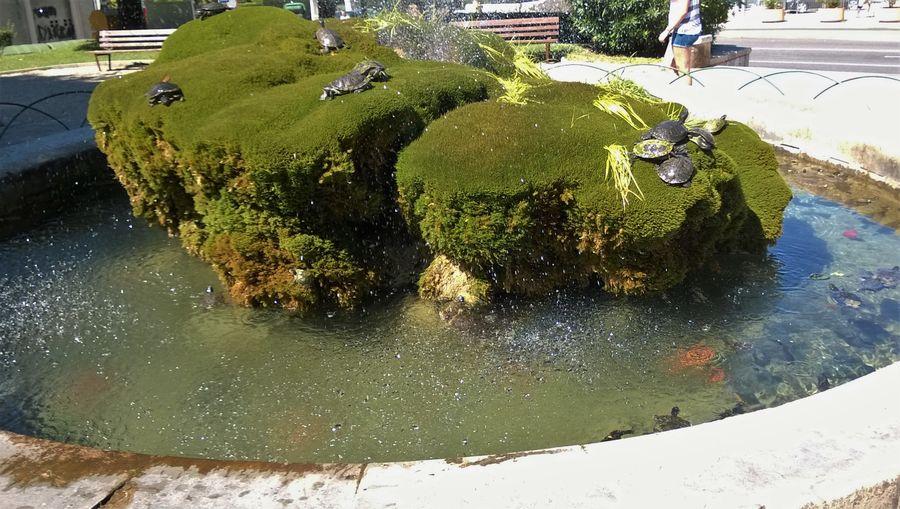 Beauty In Nature Composition Culture Dalmacija Day Exploring Fontana Fountain Grass Green Green Color Growth Hrvatska Kornjač Lush Foliage Nature Outdoors Plant Suntanning Sunčanj Tourism Turtles Water Šibeni