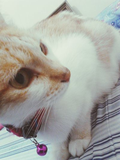 she lookin' at what? 😍😍😍💕💕❤💗 Catastic Cutecat Adorbalecat Cats Of EyeEm AmazingCat Cutee Adorable