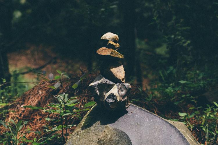 Balance Forest Nature Outdoors Pachamama  Rocks Sculpture Zen