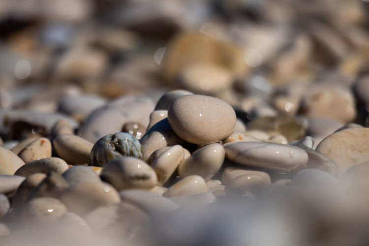 Selective Focus Close-up Backgrounds No People Full Frame Large Group Of Objects Food And Drink Food Abundance High Angle View Nature Day Still Life Land Shell Beach Stone - Object Freshness Pebble Textured  Pier Galets Galette Plage