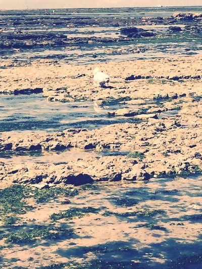 Ile D'Oleron Myprincess🐶🐶 Ilovemydog Isis😍 Freedom Capturing Freedom