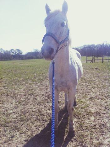 Horse Pet Photography  Love <3