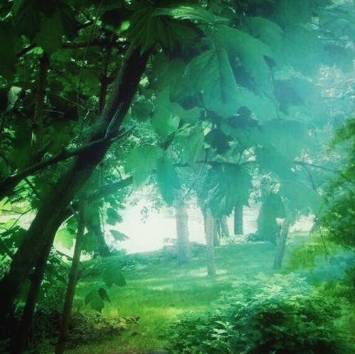 From my window: morning magic. Eye Em Nature Lover Trees Lake Tadda Community
