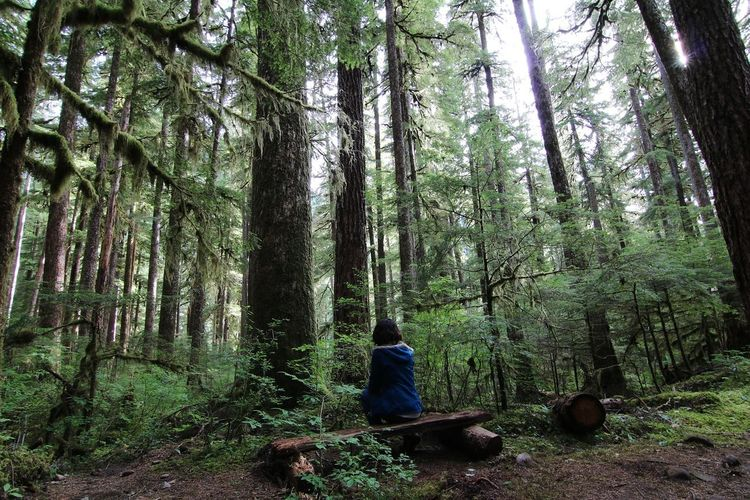 Rear view of woman sitting on bench amidst trees in olympic national park