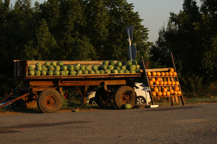 Road market. It sells melons and watermelons. Kuban flavor. Transportation Tree Mode Of Transportation Plant Land Vehicle Road Nature Day No People Outdoors Truck Cart Vehicle Trailer Agriculture Green Color Sky Field Sunlight Street Land Wheel Road Market Melon Watermelon Kuban