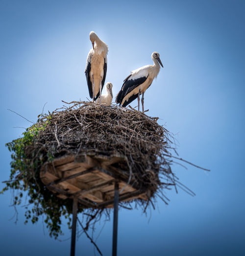 Low angle view of birds on nest against clear sky