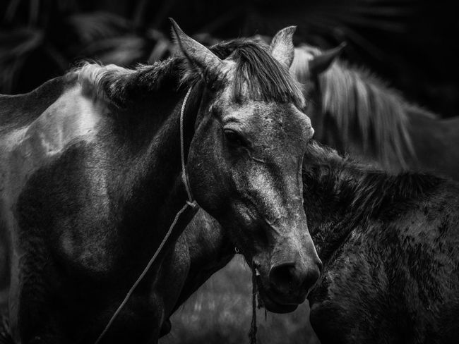 Animal Themes Black And White Friday Close-up Day Domestic Animals Horse Livestock Mammal Nature No People One Animal Outdoors EyeEmNewHere