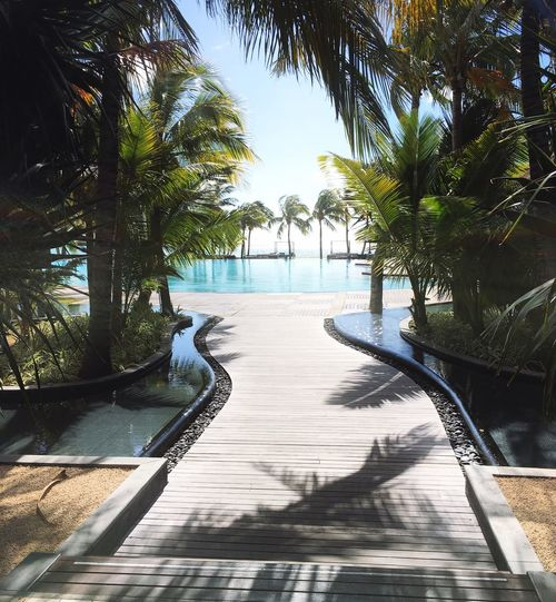 View to the pool Palm Trees Summer Paradise Beachcomber Mauritius Palm Tree Tree Water Day Tourist Resort The Way Forward Sea Swimming Pool Travel Destinations No People Vacations Sunlight