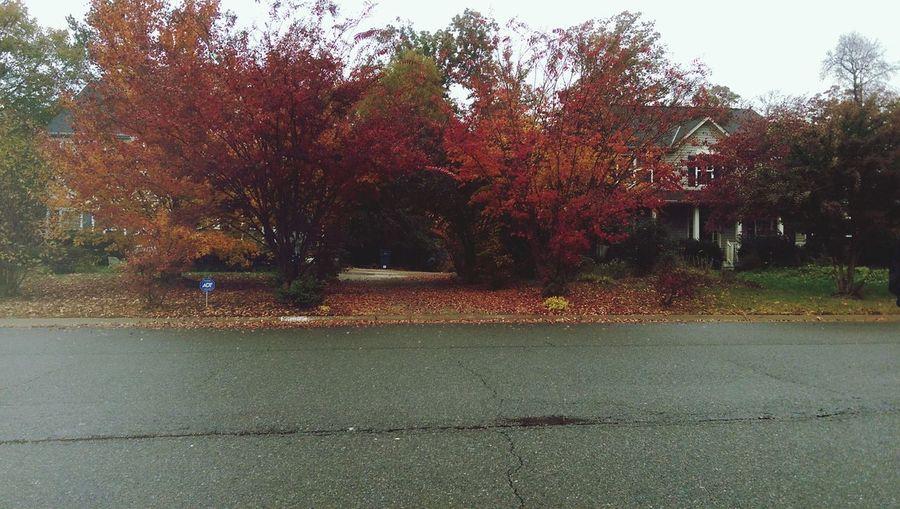 Autumn is where