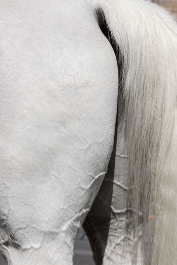 Horse skin 02 Composition Textured  White Horse Animal Animal Body Part Animal Hair Animal Themes Close-up Domestic Domestic Animals Herbivorous Horse Horse Tail Mammal No People One Animal Tail Vertebrate White Color