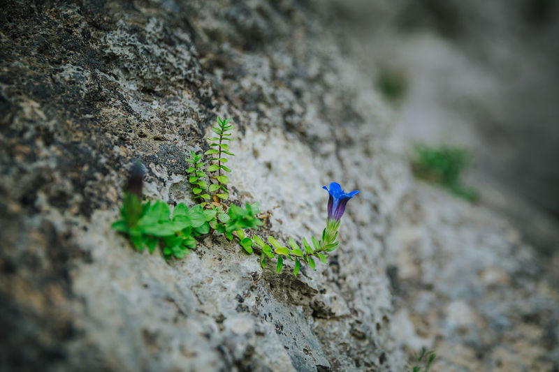 High angle view of small plant on rock