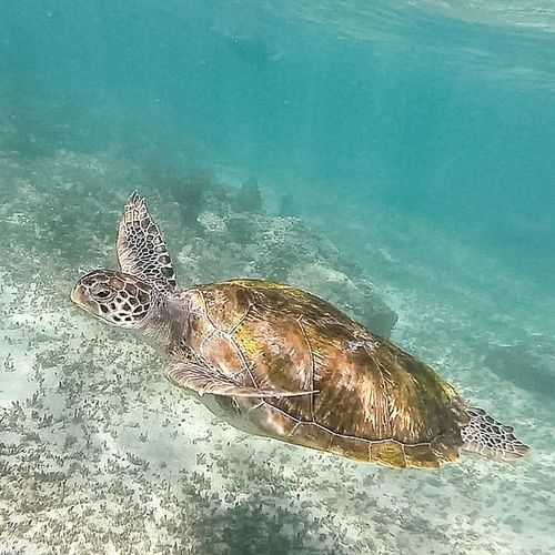 Check This Out Cheese! Taking Photos Enjoying Life Relaxing Messico  Mexico Blue Green Nature Gmm Photo Gopro Hello World Turtle Sea Turtle Turtle Love Tartaruga Mare Sea Sea Life