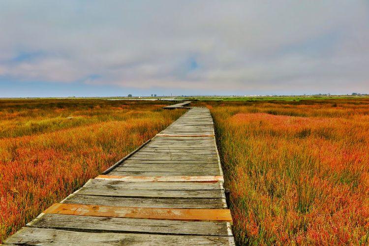 View of wooden boardwalk on field against sky